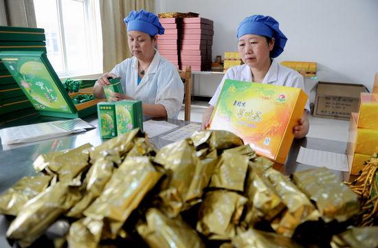 图为县老龙窝农副产品合作社包装车间员工正在包装荷叶茶